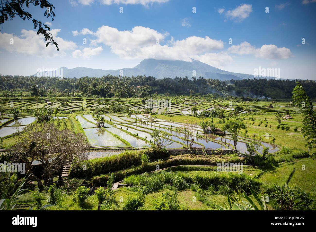 Rice Paddy Terraces in Northern Bali Near Ubud with Mount Agung in Background - Stock Image