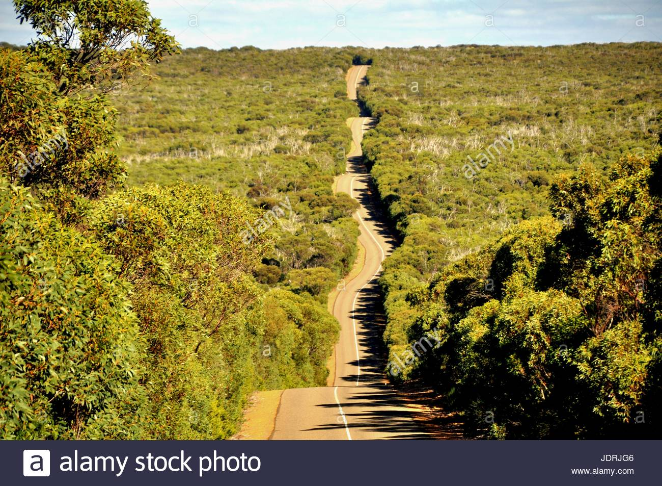 Native plants in the South Australian Murray-Darling Basin - Stock Image