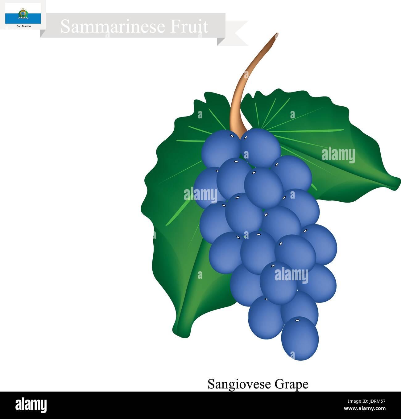 Yemen Fruit, Ripe and Sweet Grape. One of The Most Popular Fruits of Yemen. - Stock Vector