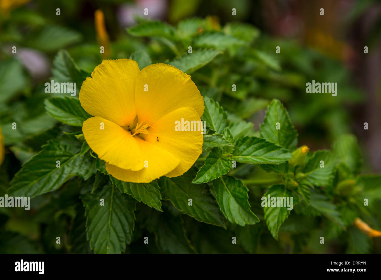 Flowers in the Pottery Village of Naha, Okinawa, Japan. - Stock Image