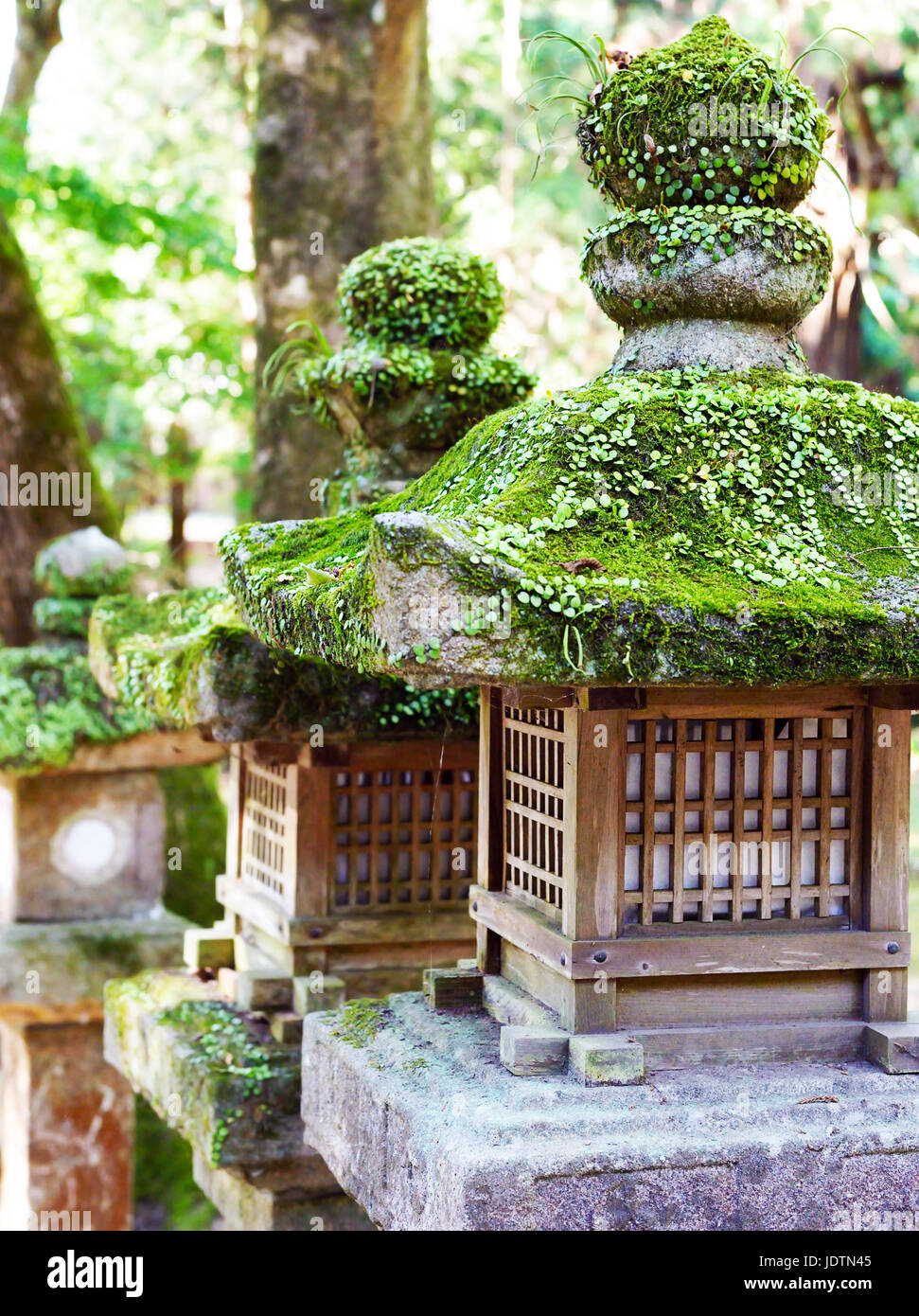 Stone lanterns covered in plants and moss, at Kasuga Taisha Shrine, Nara, Japan - Stock Image