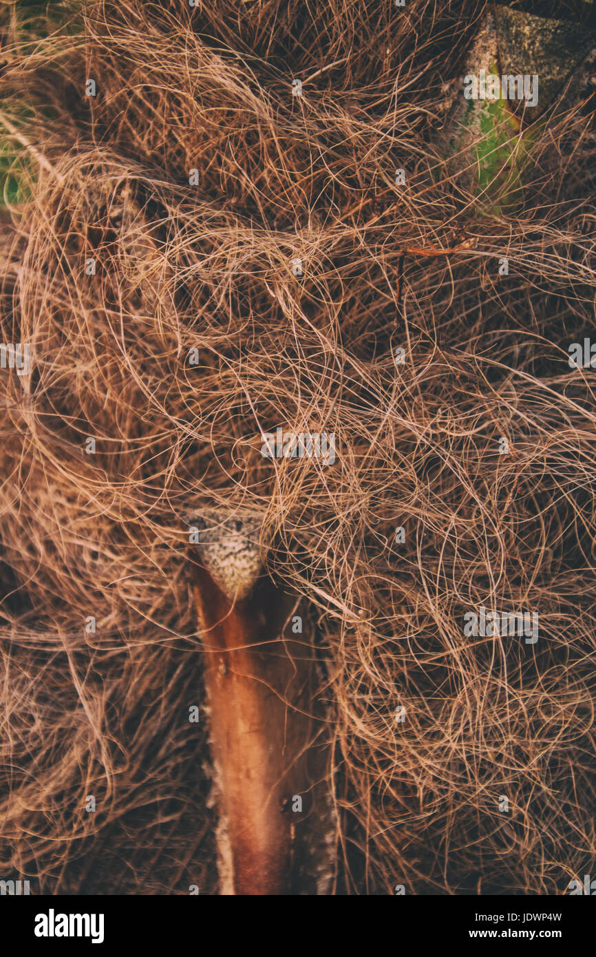 Abstract organic texture - Stock Image