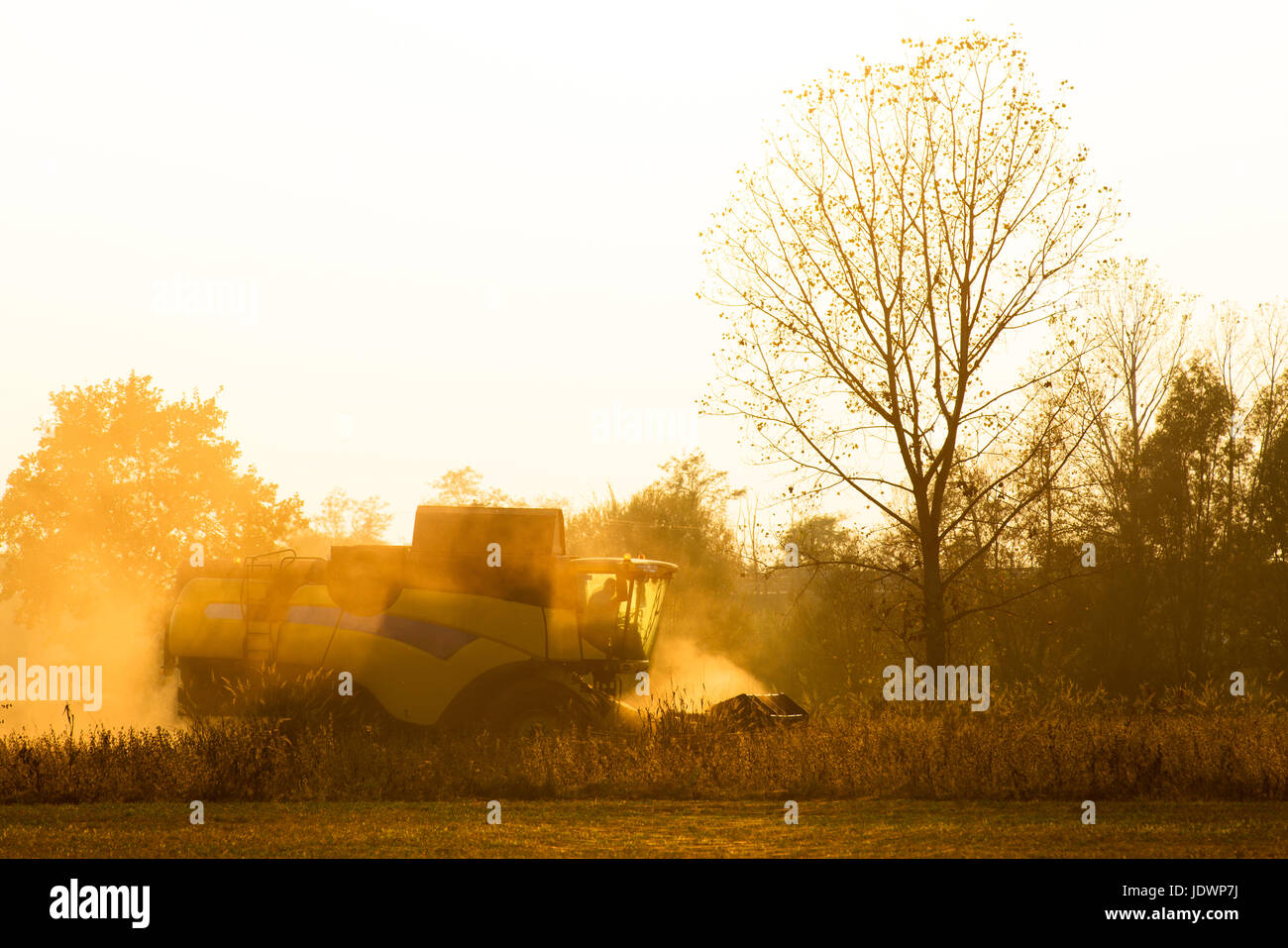 Harvester in backlight surrounded by dust works in a field at sunset Stock Photo