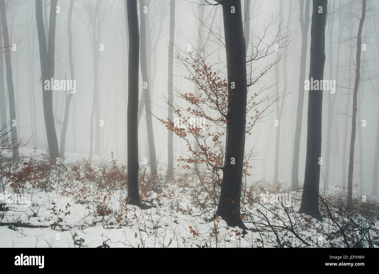 tree in fog in winter fantasy landscape - Stock Image