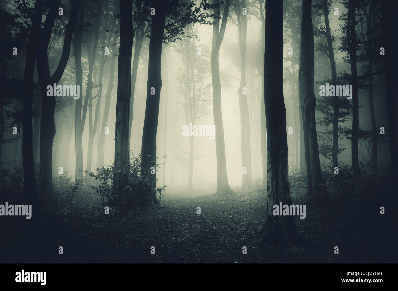dark forest landscape with trees and fog - Stock Image