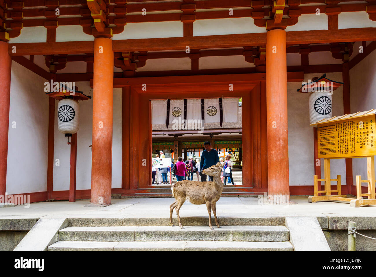 kasuga taisha grand shrine Stock Photo