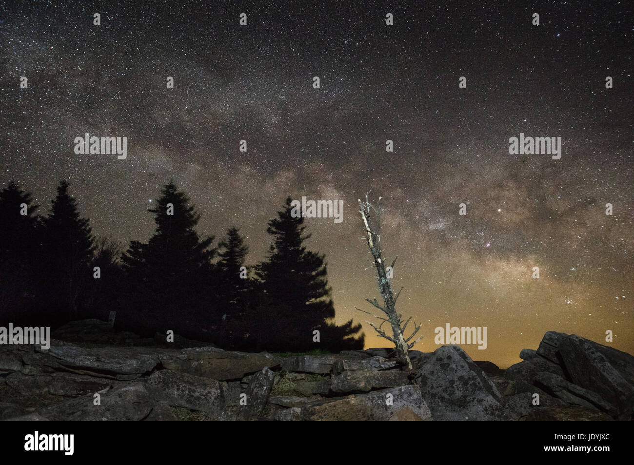 A bare pine tree stands in a boulder field against silhouetted trees and the Milky Way at night on top of Spruce - Stock Image