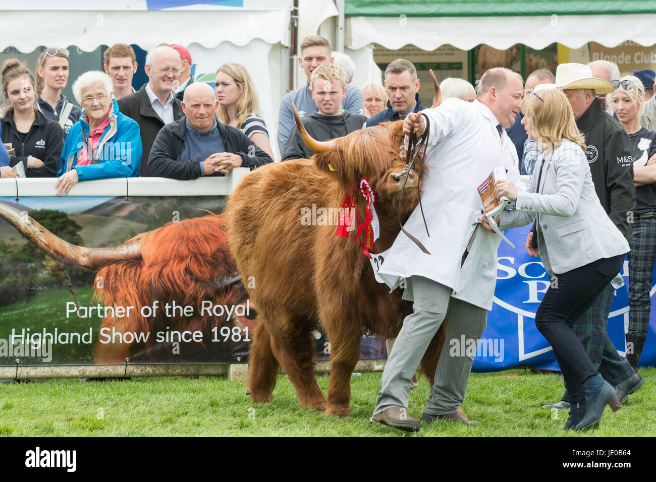 Royal Highland Show 2017 Highland Champion Eleanor of Ubhaidh  Edinburgh, Scotland, UK. 22nd June, 2017. Prize winning - Stock Image