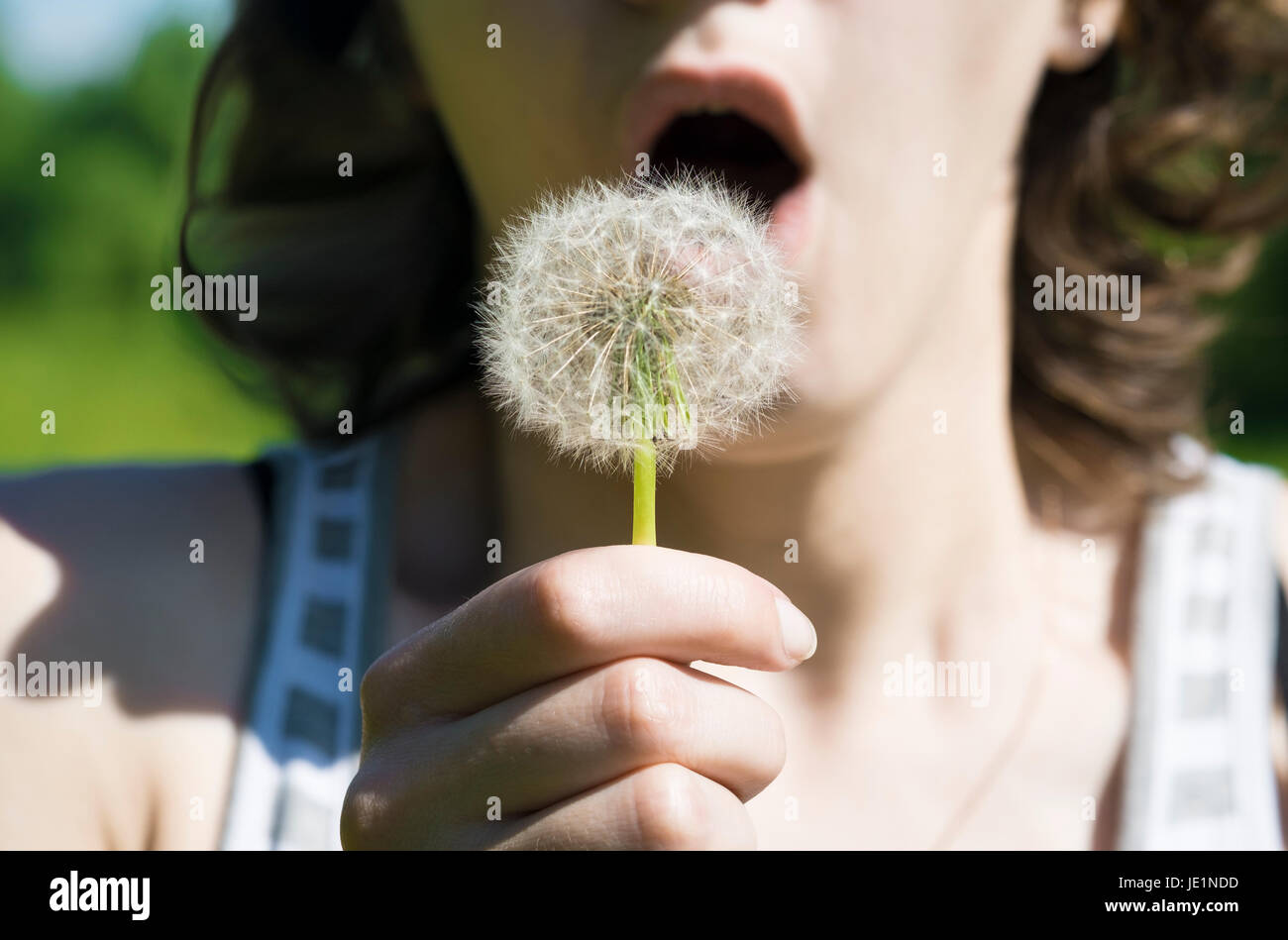 Girl Are Blowing On A White Dandelion In The Forest Stock Photo