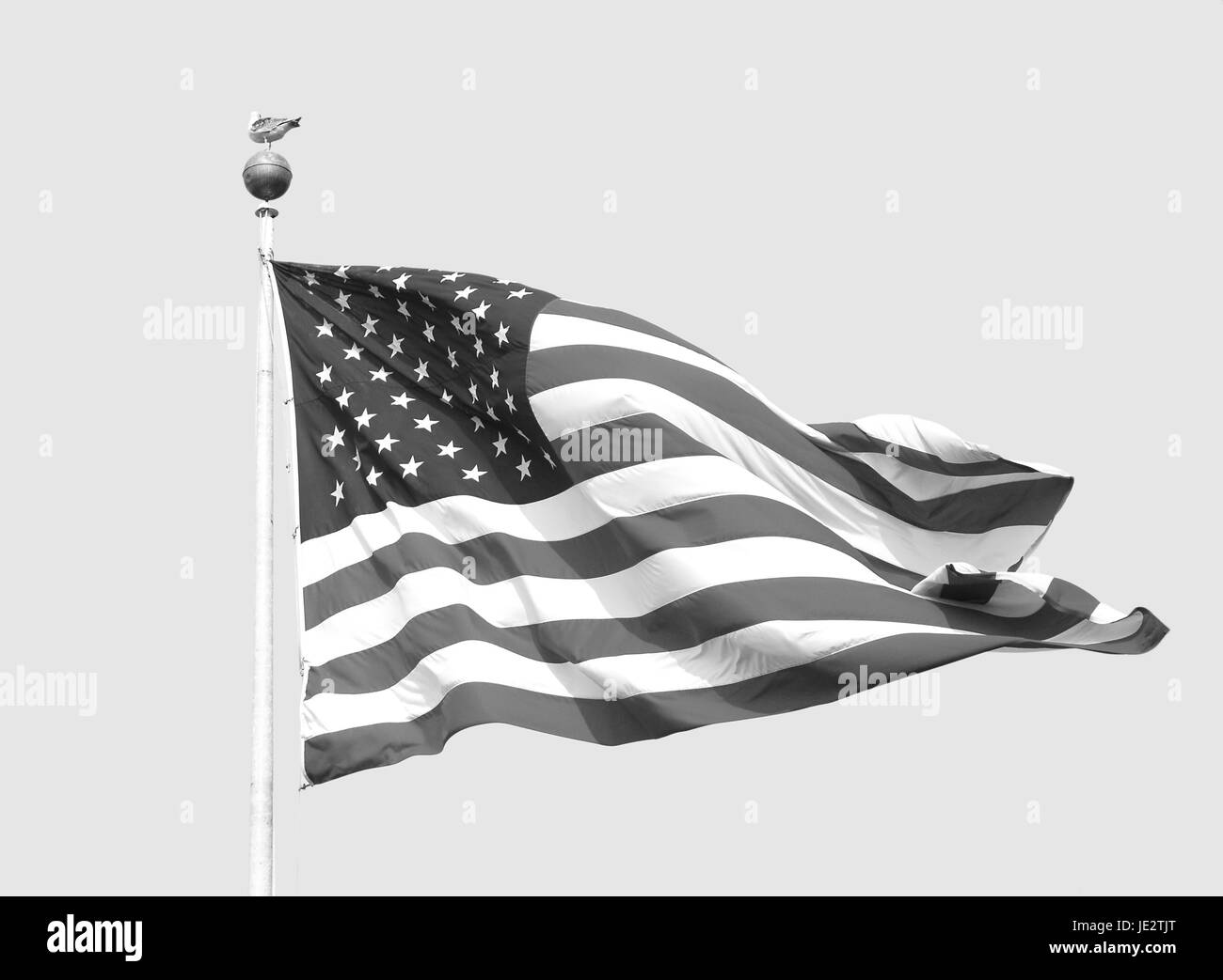 The American flag - the Stars and Stripes - flies on a sunny day against a clear sky. A seagull stands nonchalantly - Stock Image