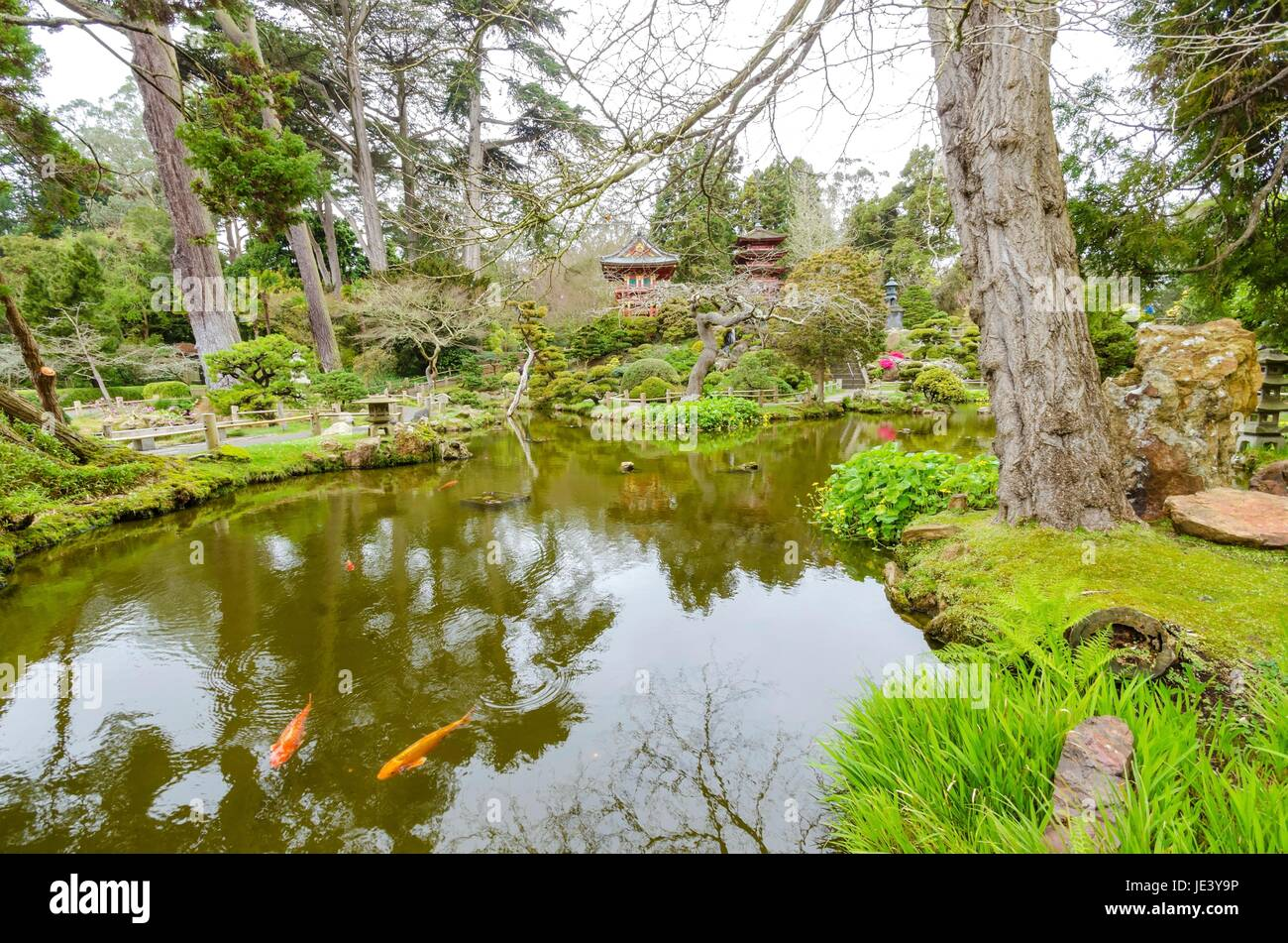 The Japanese Tea Garden in Golden Gate Park in San Francisco, California, United States of America. A view of the Stock Photo