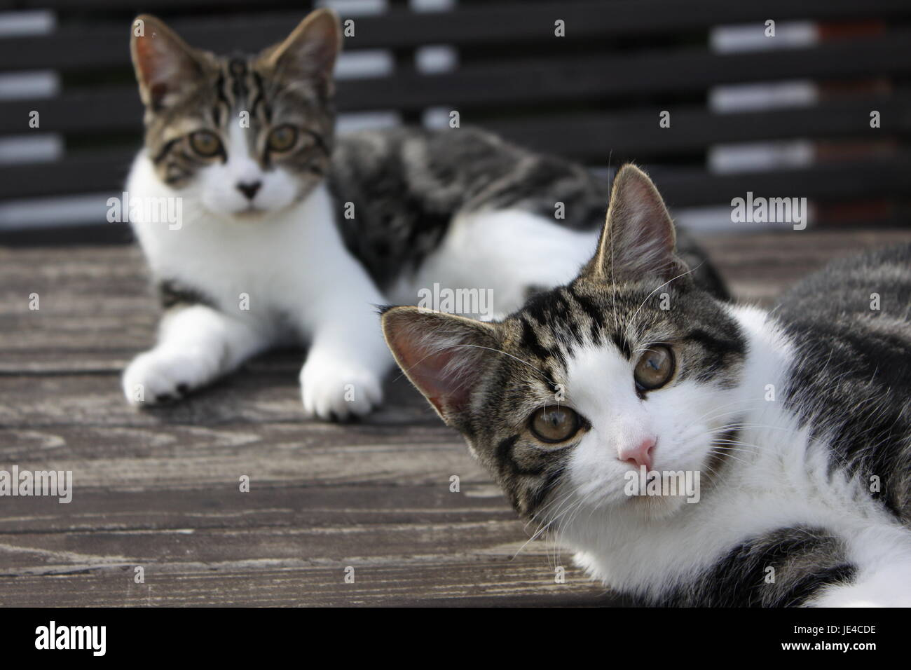 Two Kittens on wooden table - Stock Image