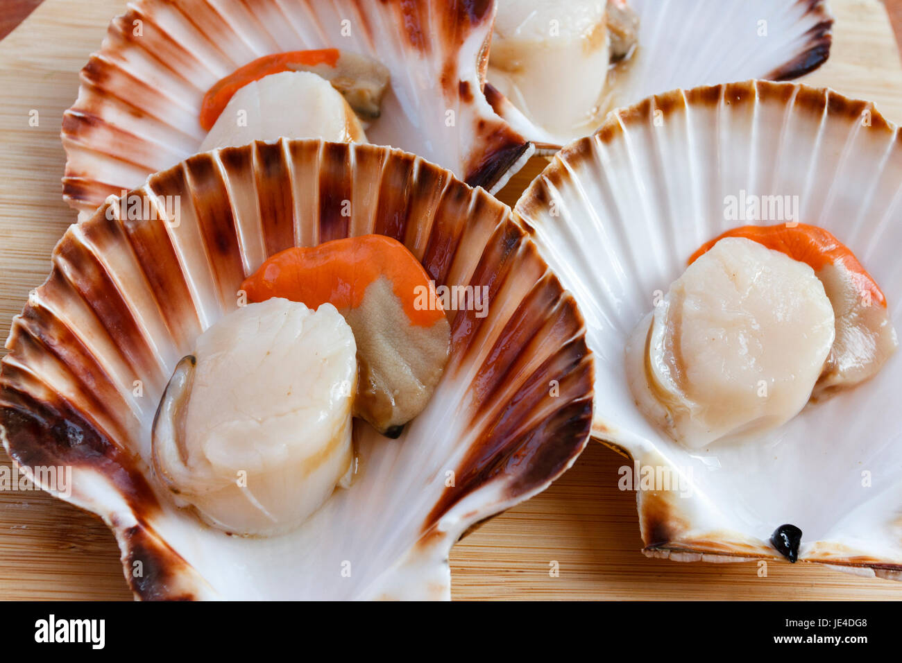 Raw scallops in half shell - Stock Image