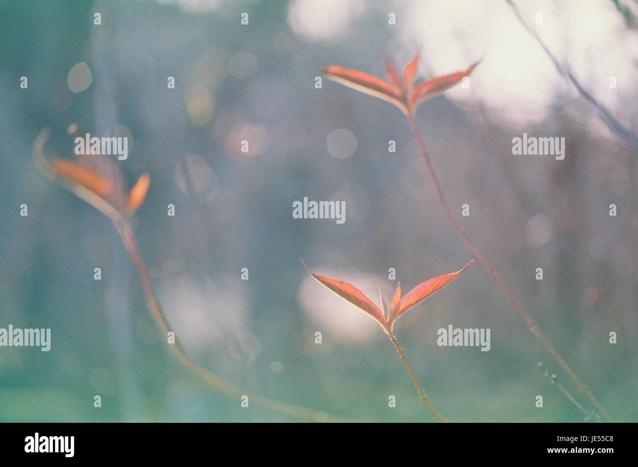 Expired film photo of autumn leaves - Stock Image