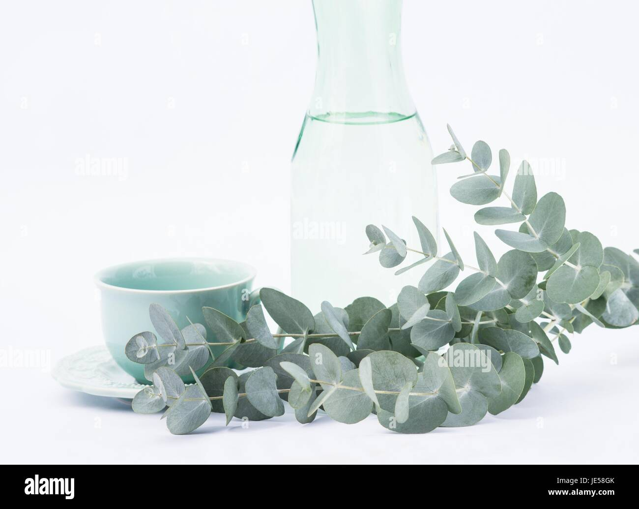 Eucalyptus perriniana branches and tea cup on white background - Stock Image