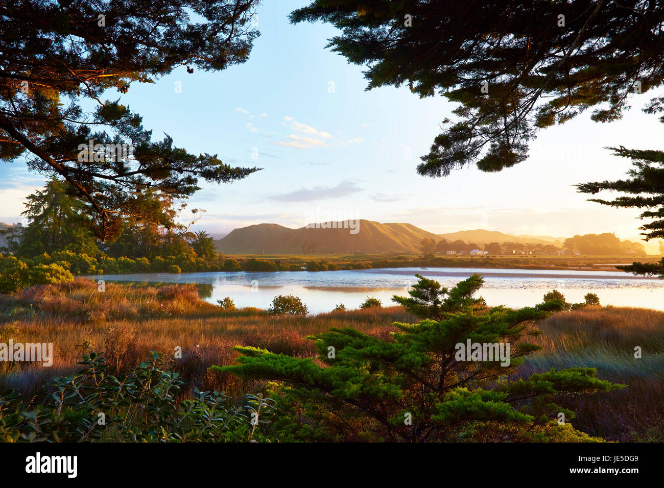 Wetlands behind Tolaga Bay (Māori: Uawa) beach - Stock Image