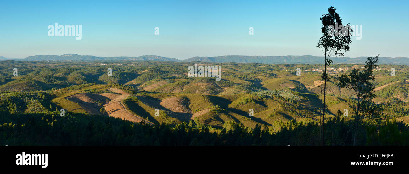 The central pine forests of Portugal in the Beira Baixa. - Stock Image