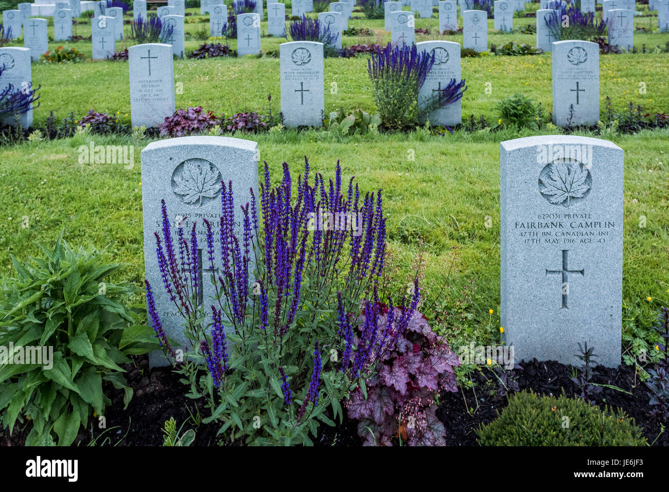 Gravesites of Canadian Infantry soldiers, Mountain View Cemetery, Vancouver, British Columbia, Canada, - Stock Image