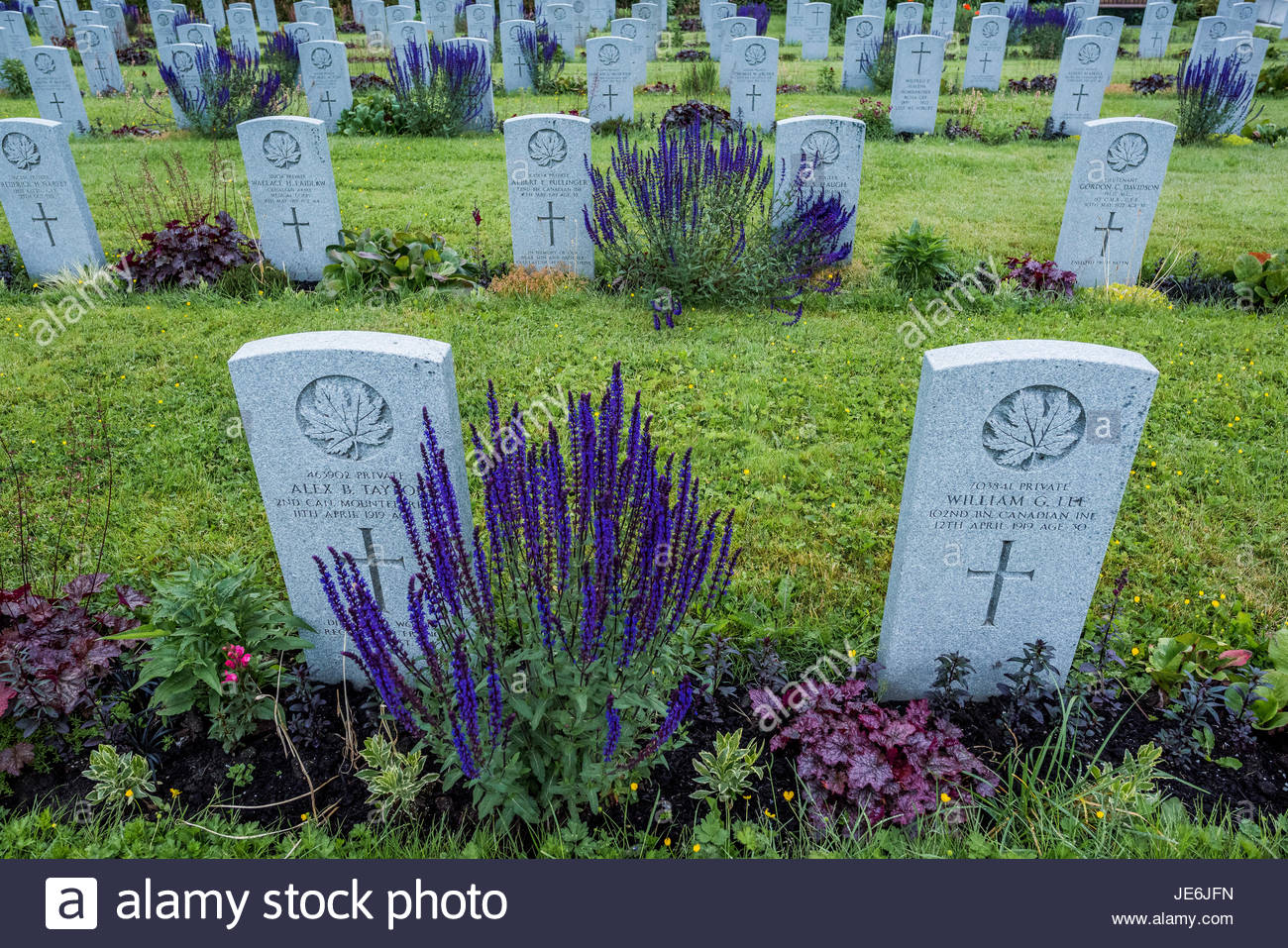 Gravesites of Canadian Infantry soldiers, Mountain View Cemetery, Vancouver, British Columbia, Canada, Stock Photo