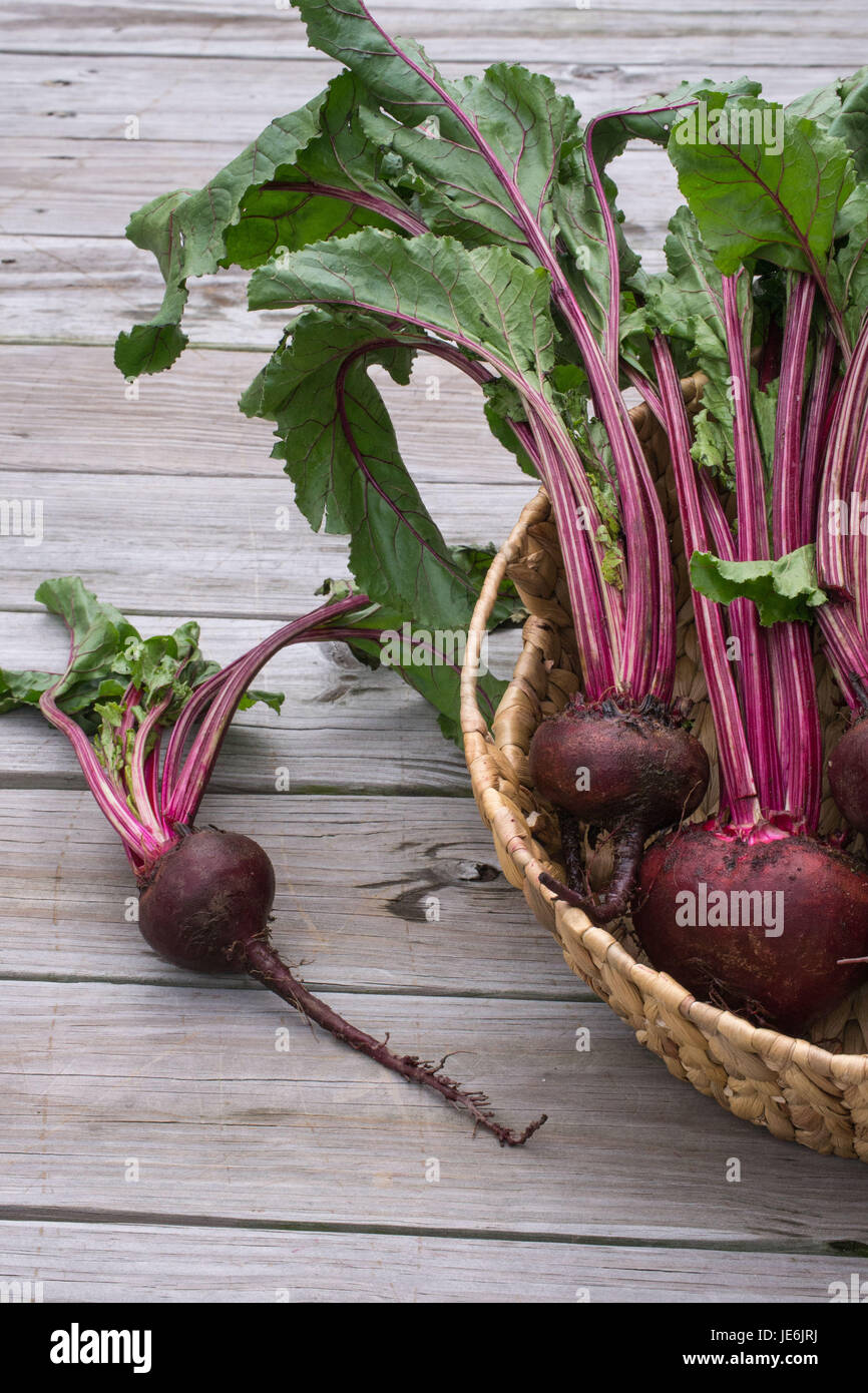 Closeup-Fresh Beets from the garden with rich red colors set off by the green leaves - healthy farm to table food - Stock Image