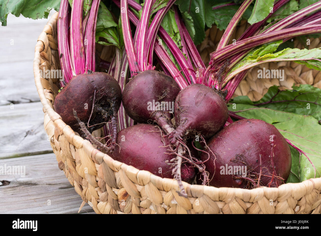Closeup-Fresh Beets from the garden with rich red colors set off by the green leaves - healthy farm to table food Stock Photo