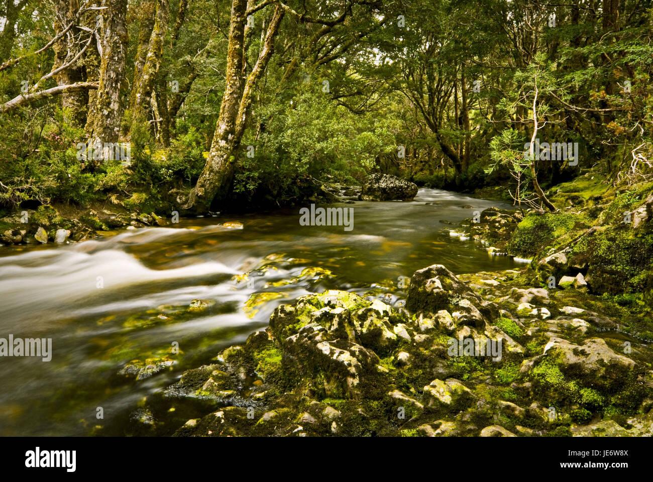 Australia, Tasmania, Flatly, Cradle Mountain, national park, rainforest, - Stock Image