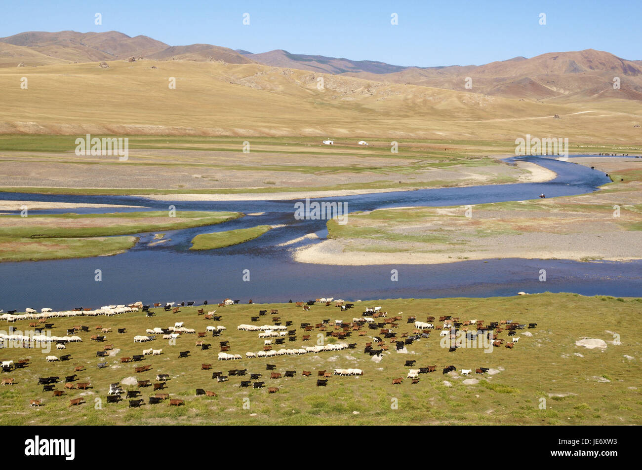 Mongolia, Central Asia, Ovorkhangai province, historical Orkhon valley, UNESCO world heritage, Orkhon flux, flock - Stock Image