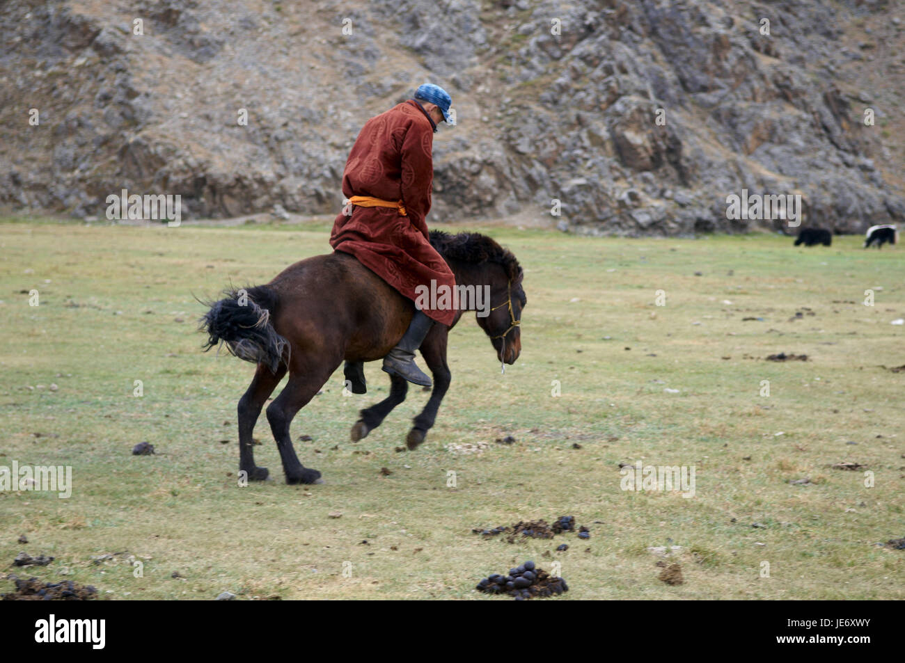 Mongolia, Central Asia, Ovorkhangai province, historical Orkhon valley, UNESCO world heritage, nomad, bleed, horse Stock Photo