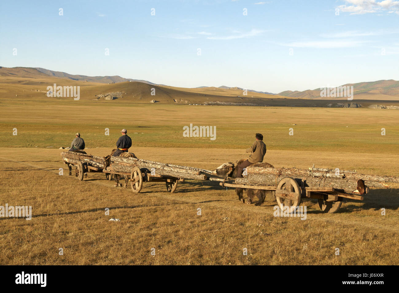 Mongolia, Central Asia, Arkhangai province, nomad, yaks, carriages, wooden carry, - Stock Image
