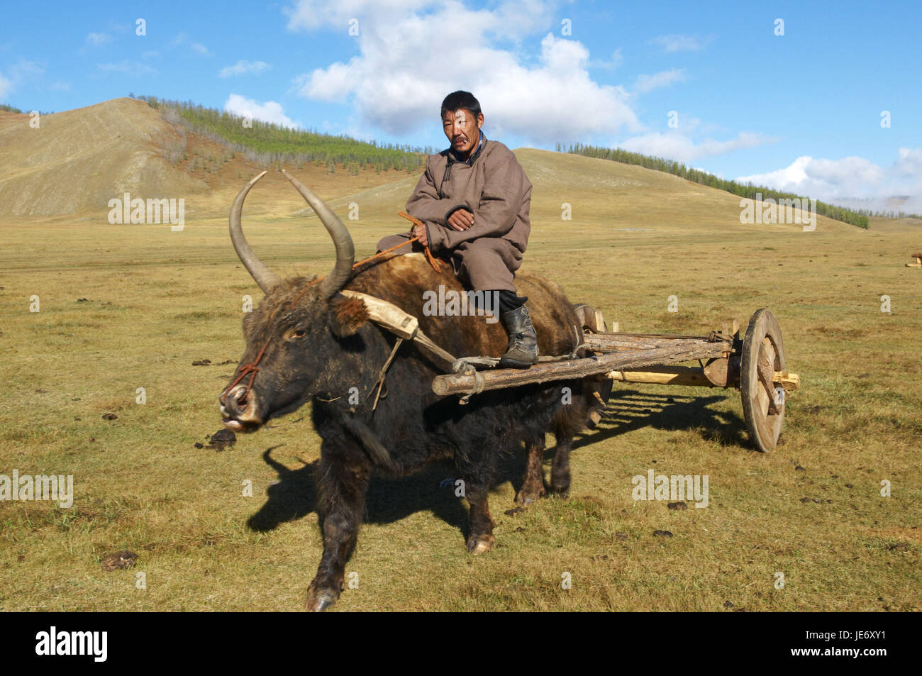 Mongolia, Central Asia, Arkhangai province, nomad, man on his yak, carriage, drag, Stock Photo