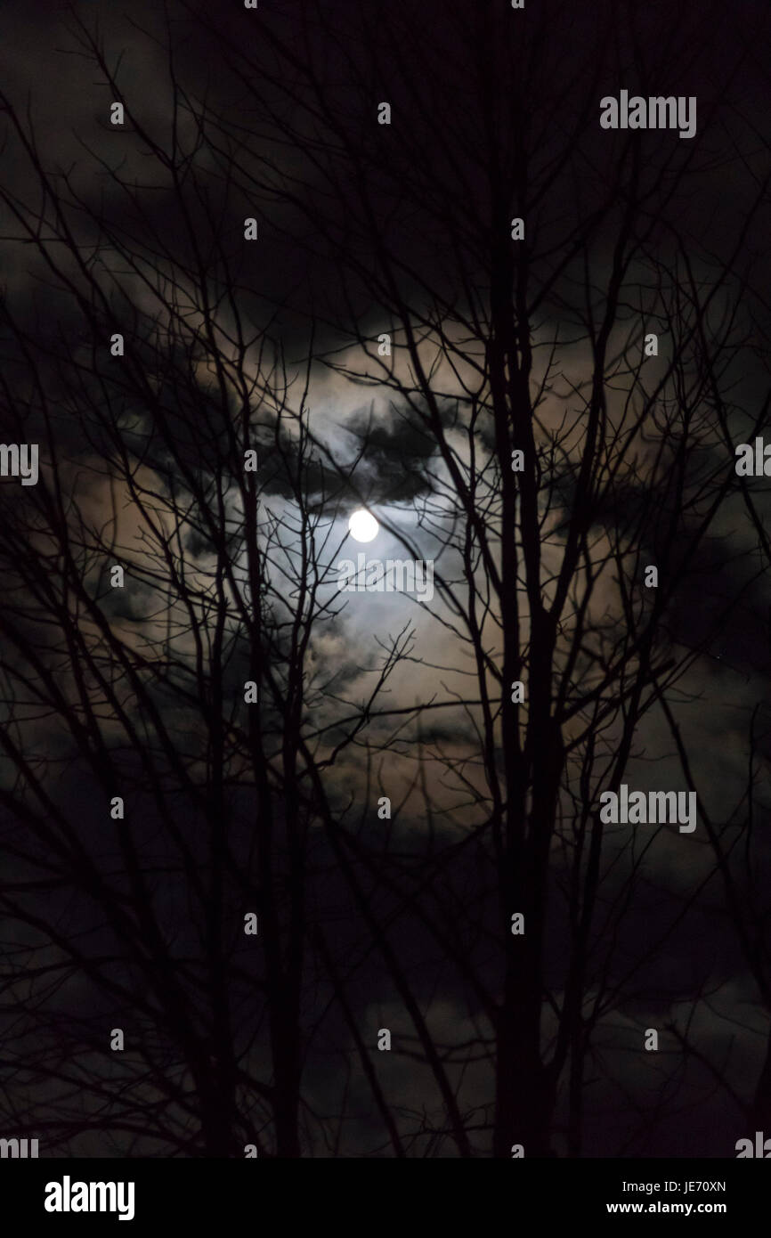 Indiana, Pennsylvania - A nearly full moon through the trees in western Pennsylvania. - Stock Image