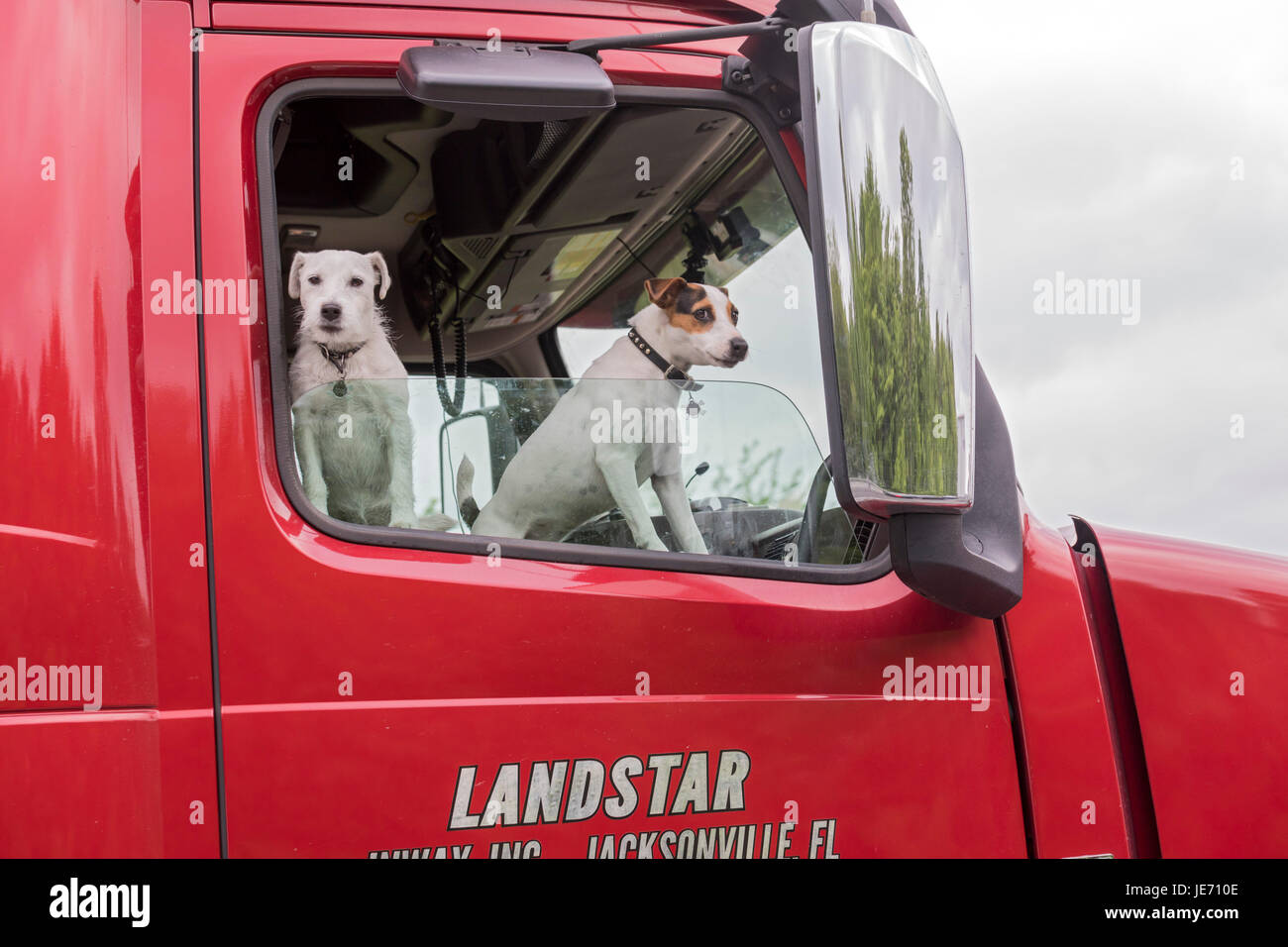 Mercer, Pennsylvania - Two dogs riding in a long-haul truck on Interstate 80 in western Pennsylvania. - Stock Image