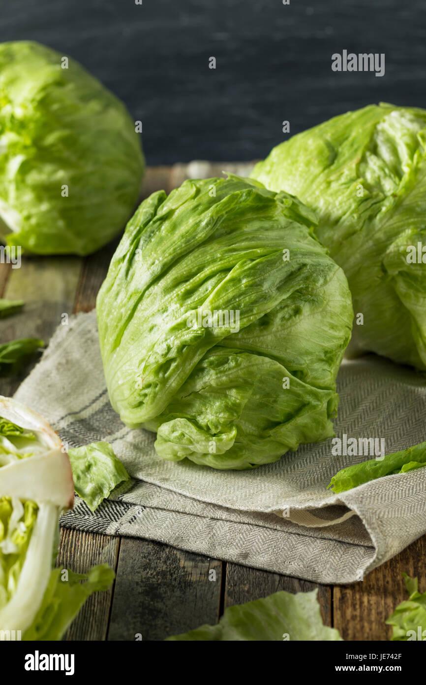 Raw Organic Round Crisp Iceberg Lettuce Ready to EAt - Stock Image