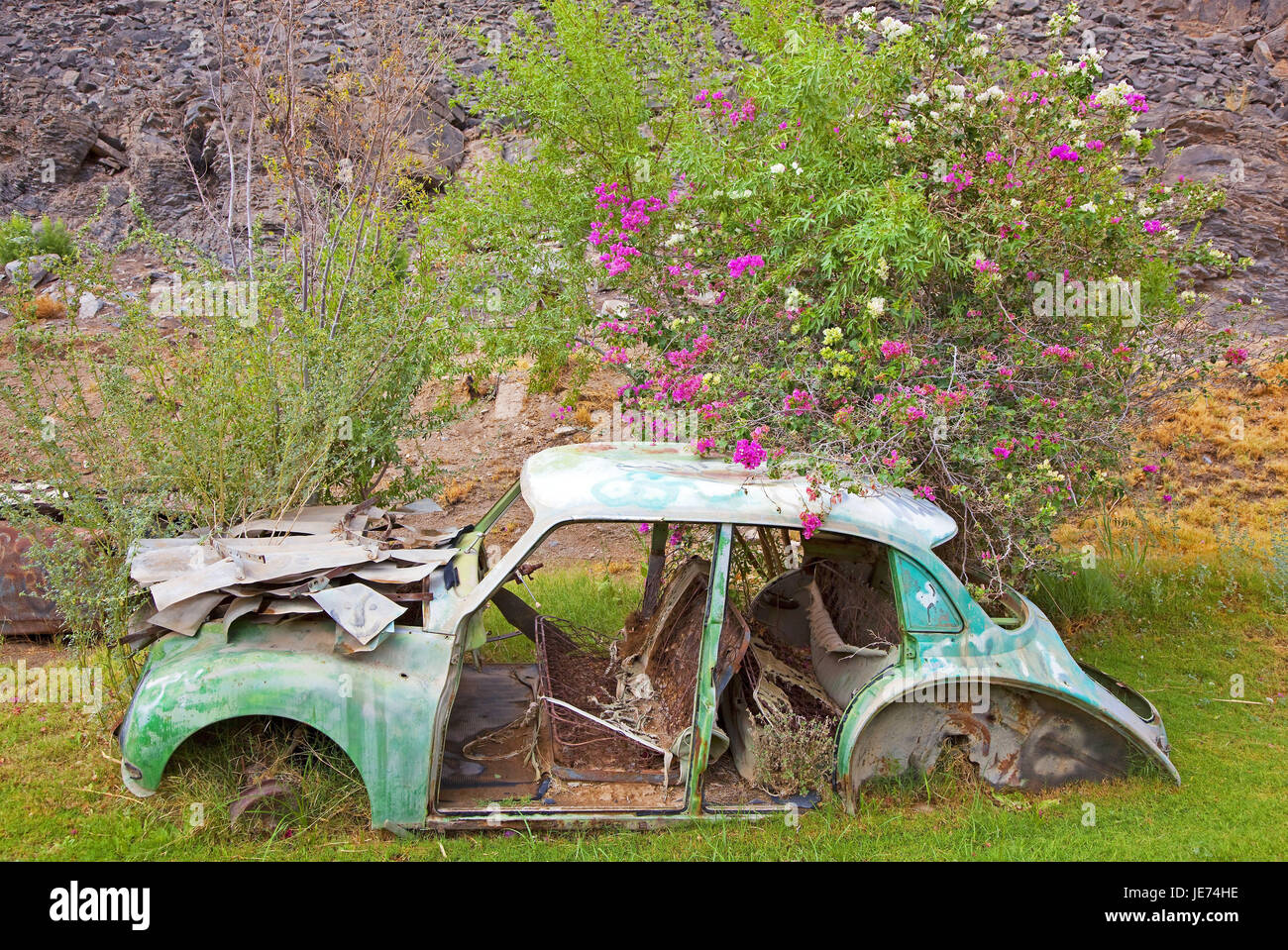 South Africa, Namaqualand, Vioolsdrif, scrap vehicle, scenery, stone inclination, ingrown, bushes, blossoms, pink, - Stock Image