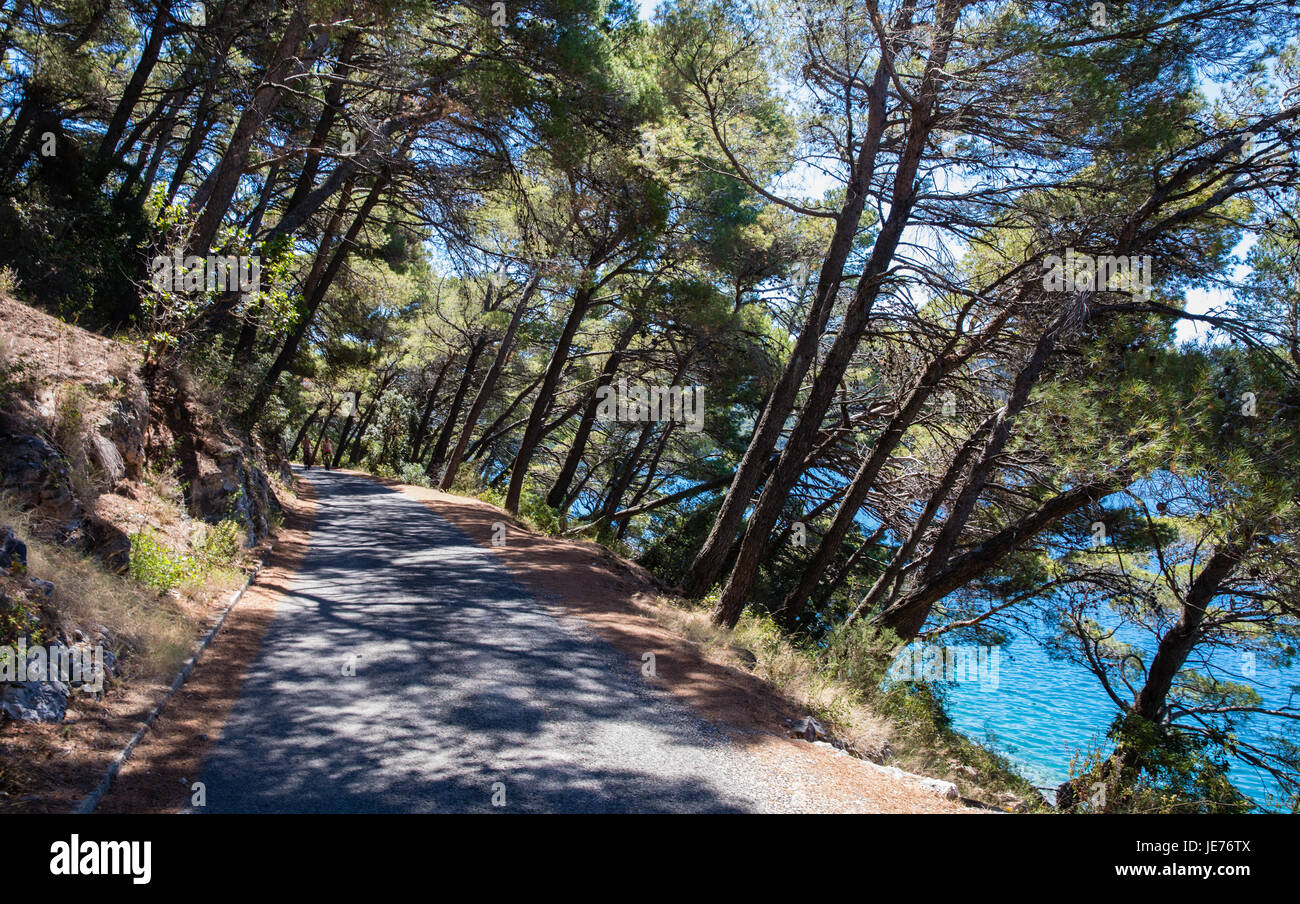 Leaning Aleppo pines shading the track around Jezero lake on the island of Mljet in Croatia - Stock Image