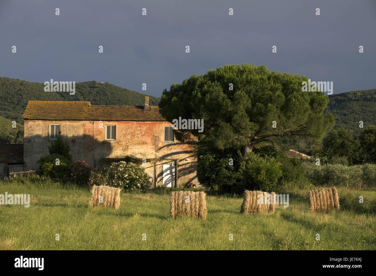 Italy, Tuscany, La Maremma, Monte Argentario, farmhouse, - Stock Image
