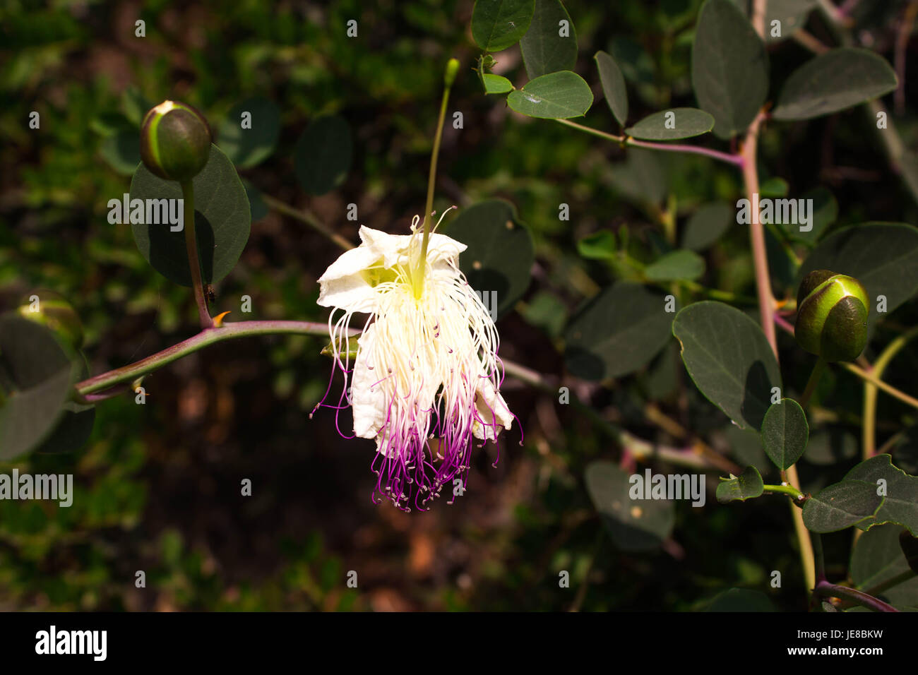 Wild plants and flowers makro photography - Stock Image
