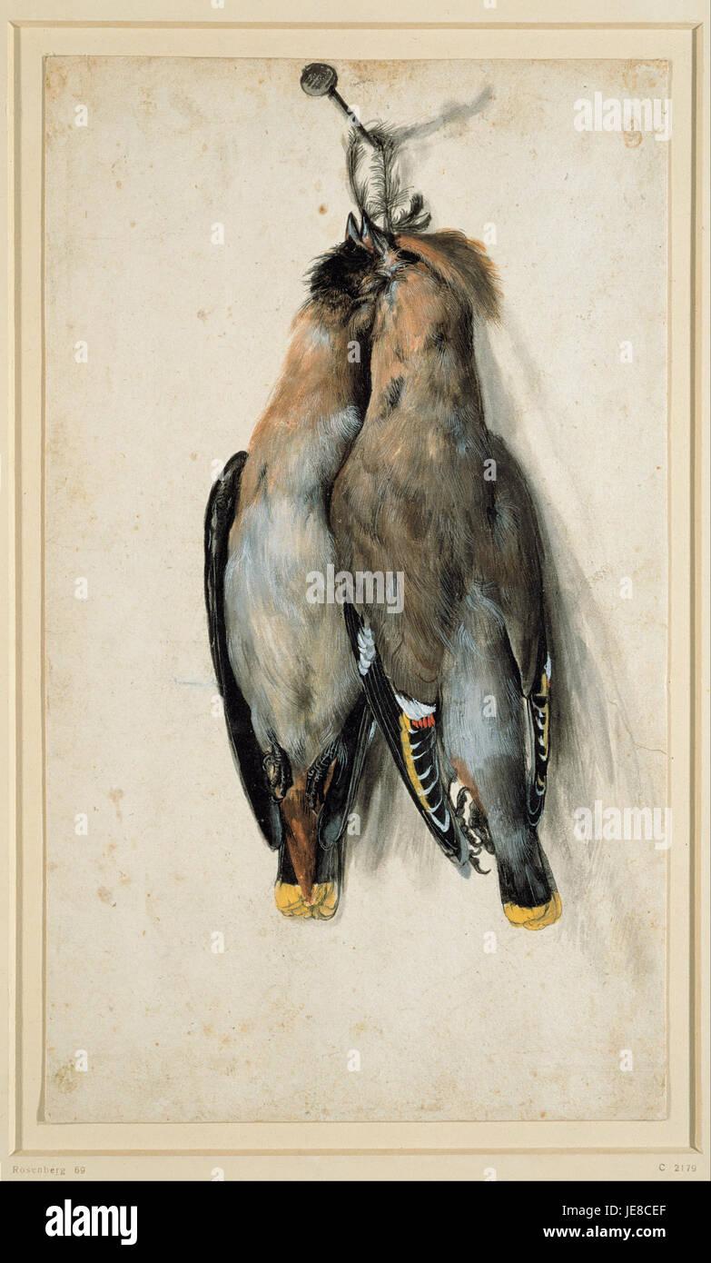 Lucas Cranach the Elder - Two Dead Bohemian Waxwings - - Stock Image