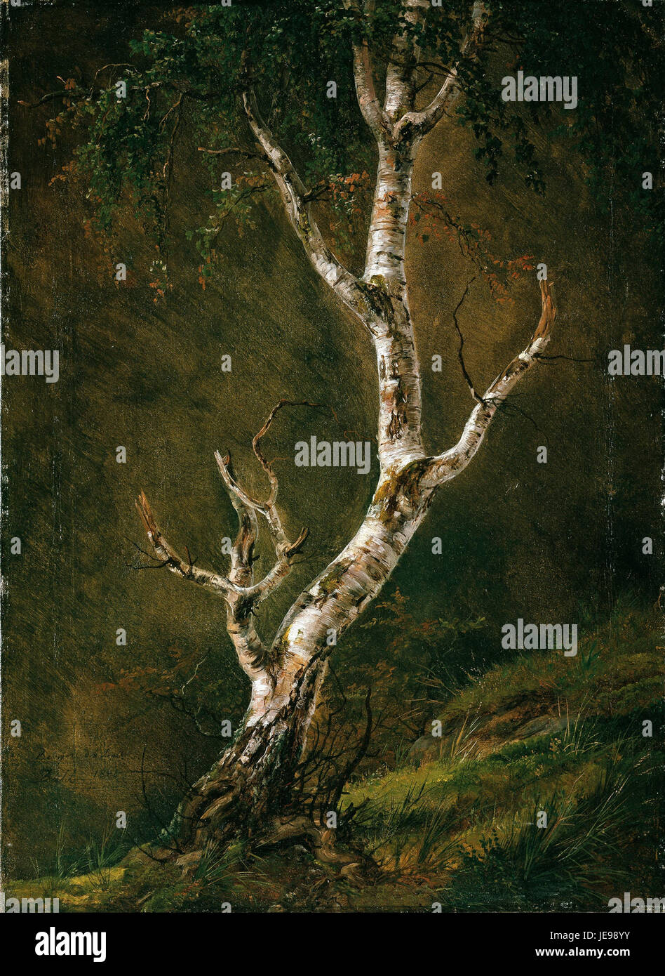 Johan Christian Dahl - Study of a Birch Tree - Stock Photo