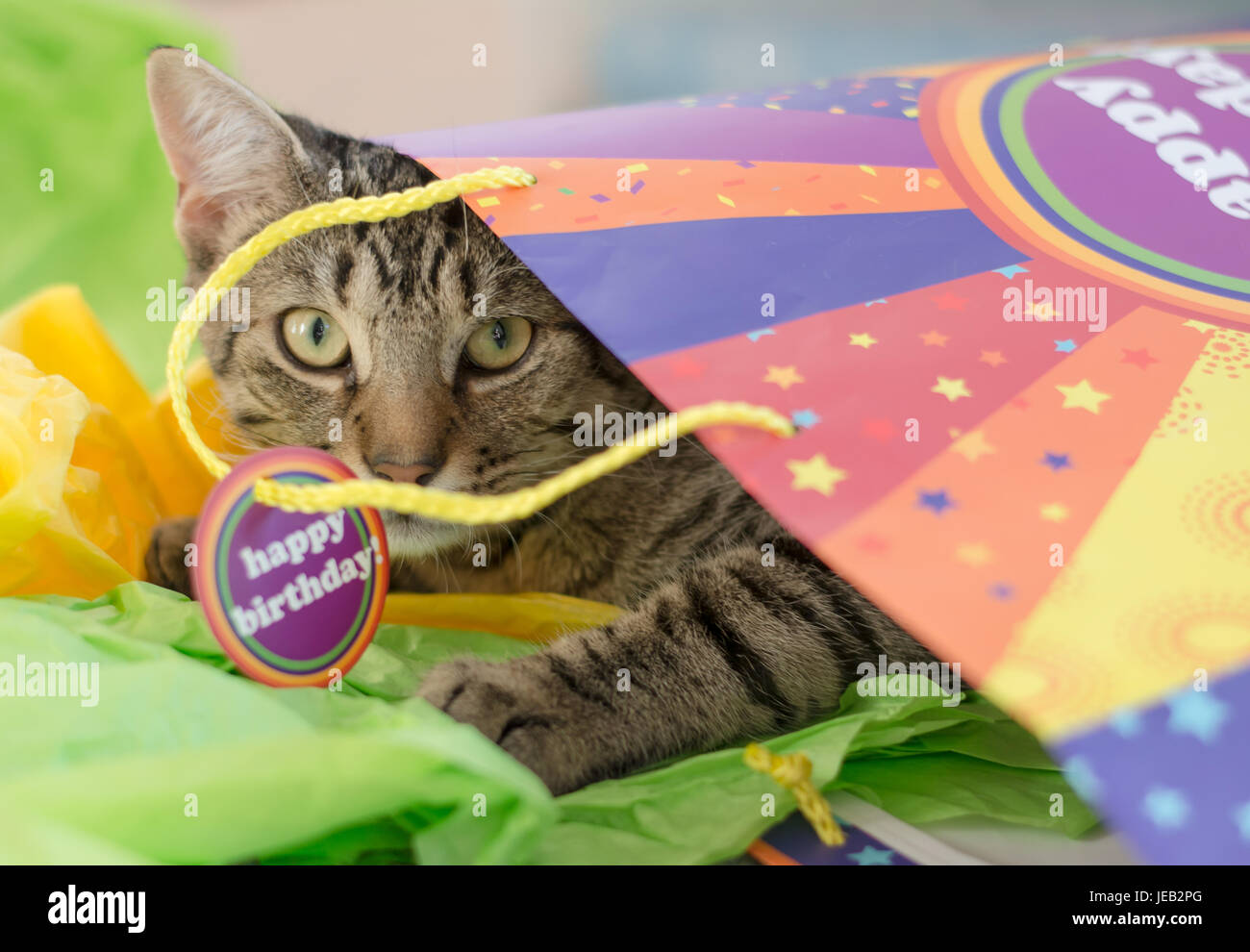 Cat Playing In A Happy Birthday Gift Bag
