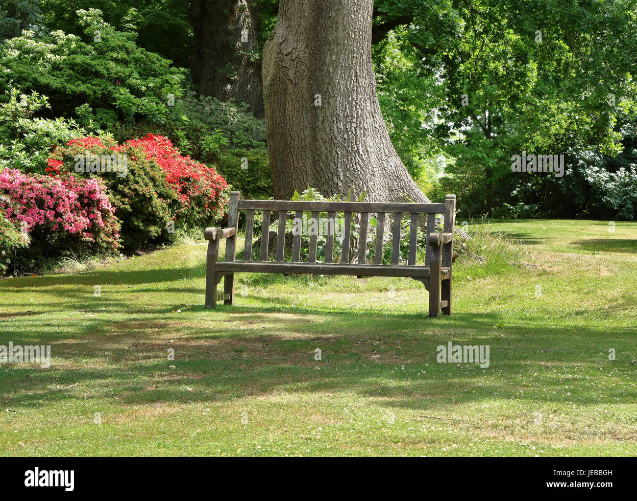 Bench seat in an english garden with a hedge filled with flowering Azaleas - Stock Image