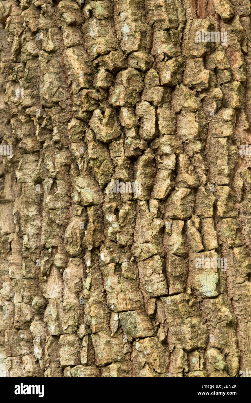 Bark surface or texture background. - Stock Image