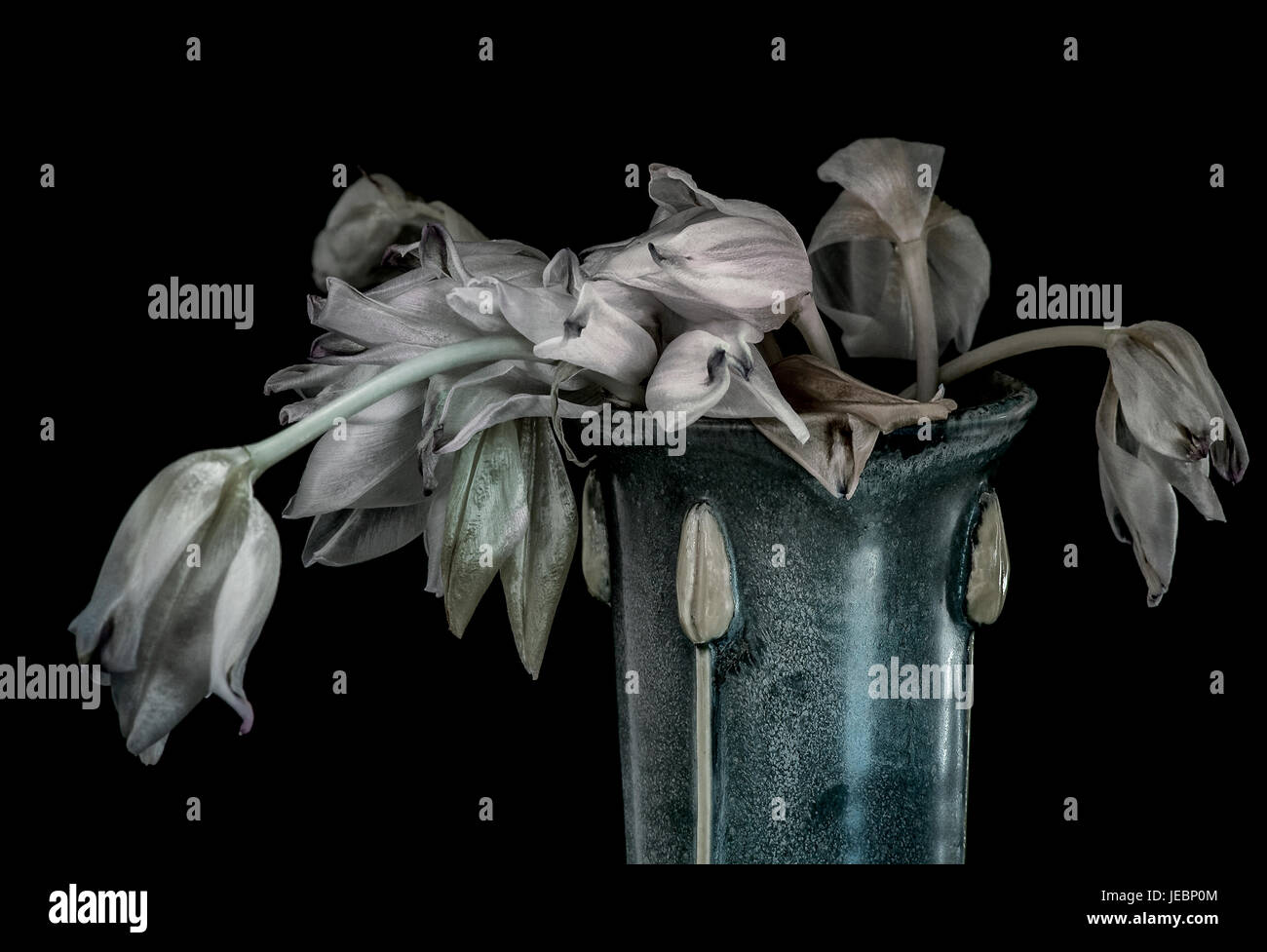 Wilted tulips in vase- still life with black background Stock Photo