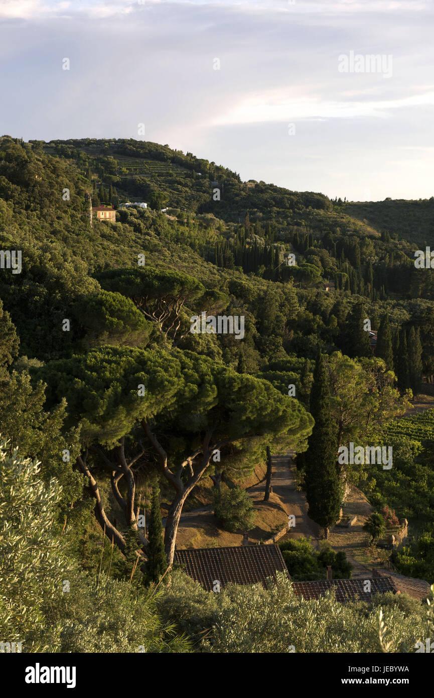 Italy, Tuscany, La Maremma, Monte Argentario, promontory with wood, - Stock Image