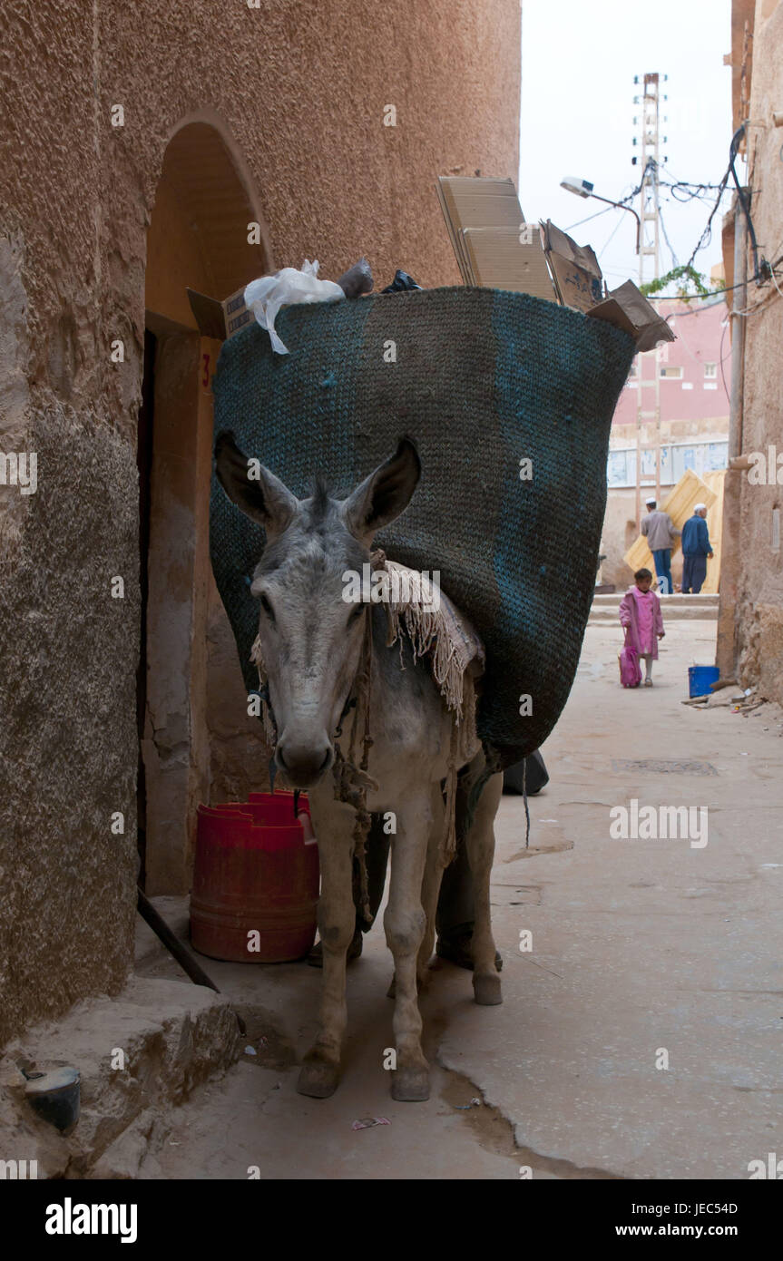 Man charges a load donkey in the village el Atteuf in the UNESCO world cultural heritage M'Zab, Algeria, Africa, - Stock Image