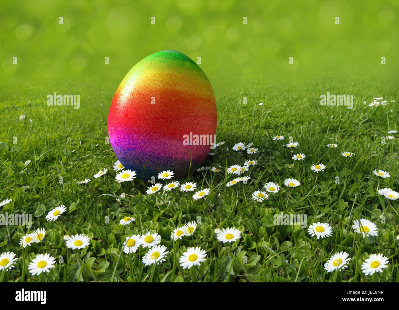Easter, meadow, daisy, Easter egg, rainbow-coloured, egg search, [M], grass, flower meadow, spring meadow, flowers, - Stock Image
