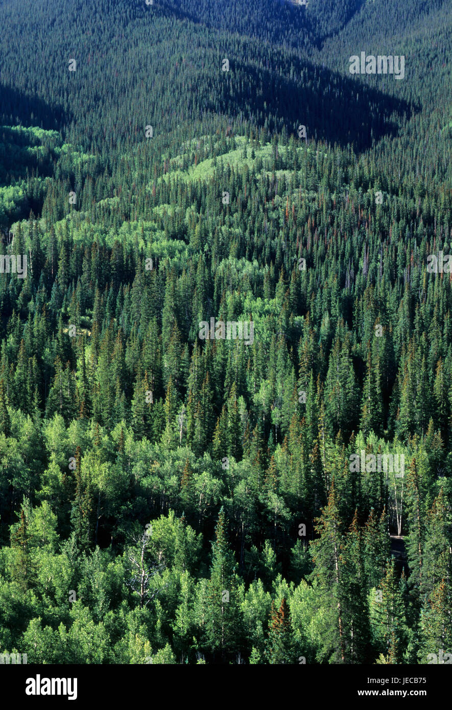 Forest slope, Silver Thread National Scenic Byway, Gunnison National Forest, Colorado - Stock Image