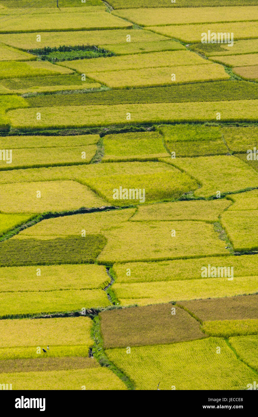 Creative patterns and textures of rice fields in Himalayan region - Stock Image