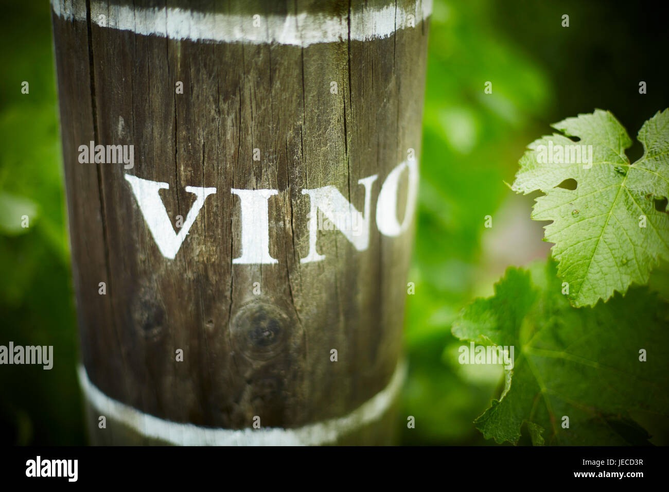 Vino end row vine markings - Stock Image
