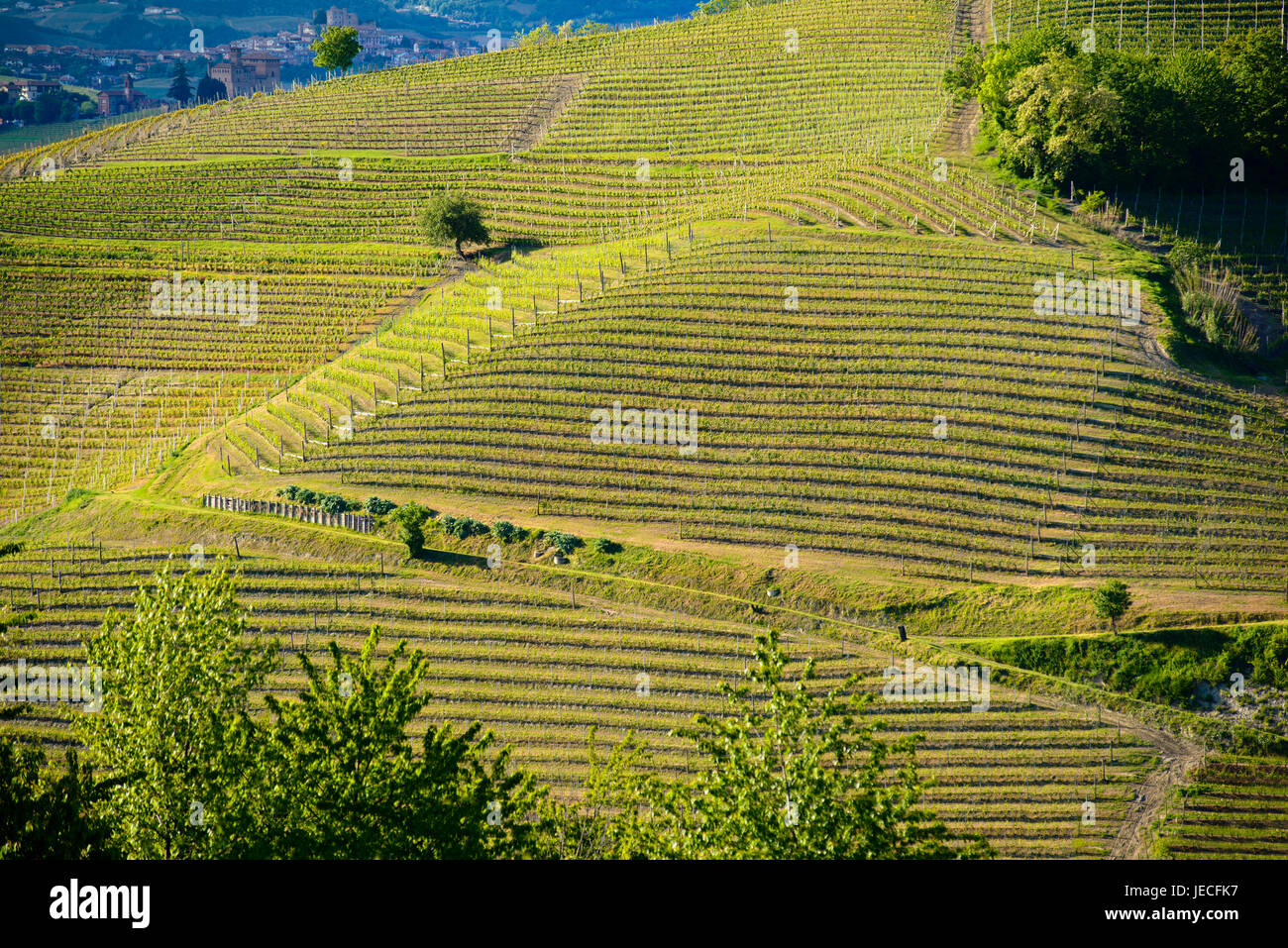 View of the vineyards and Langa hills - Stock Image